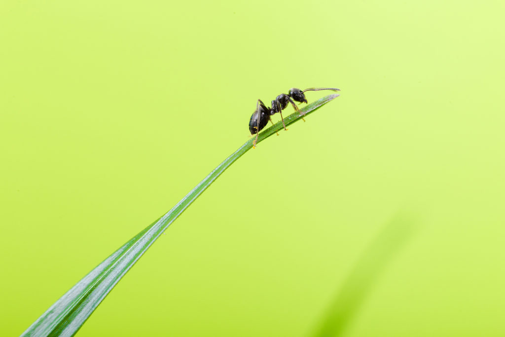 Ants won't enter your home thanks to these simple tricks