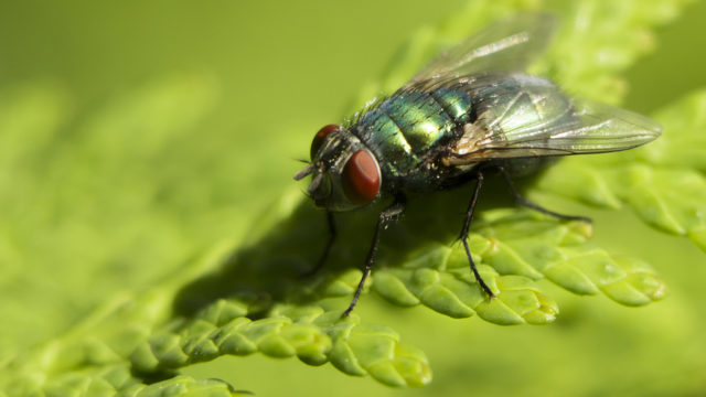 Everything you should know to ward off insects from your home
