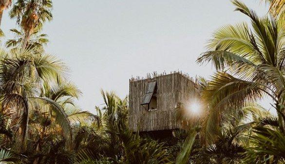 Les 13 hôtels dans les arbres les plus spectaculaires au monde