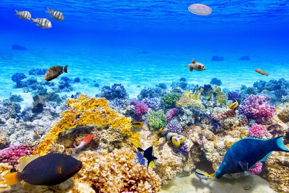 Les 10 plus beaux endroits pour faire de la plongée