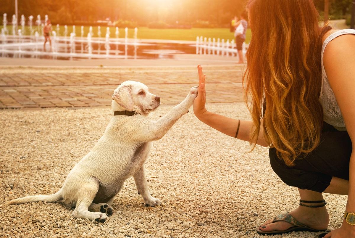 chien-patte-main-comportement