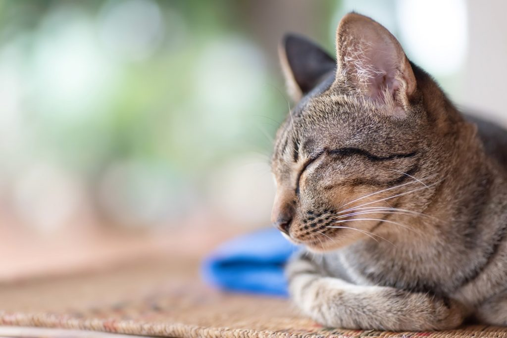 Find out why your cat isn't happy at home with these 10 signs