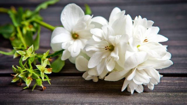 8 flowers that don't need a lot of upkeep