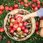 Top 10 prettiest apple orchards in the United States