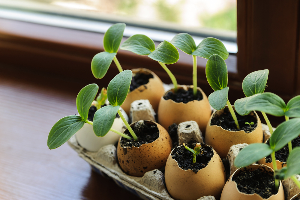 10 astuces de jardinage parfaites pour vos projets maison