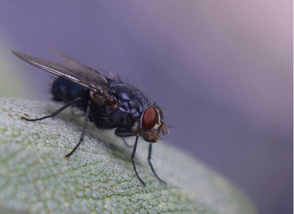 10 infallible tricks to get rid of flies