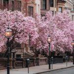Les 12 meilleures choses à faire à Boston, la ville des Champions