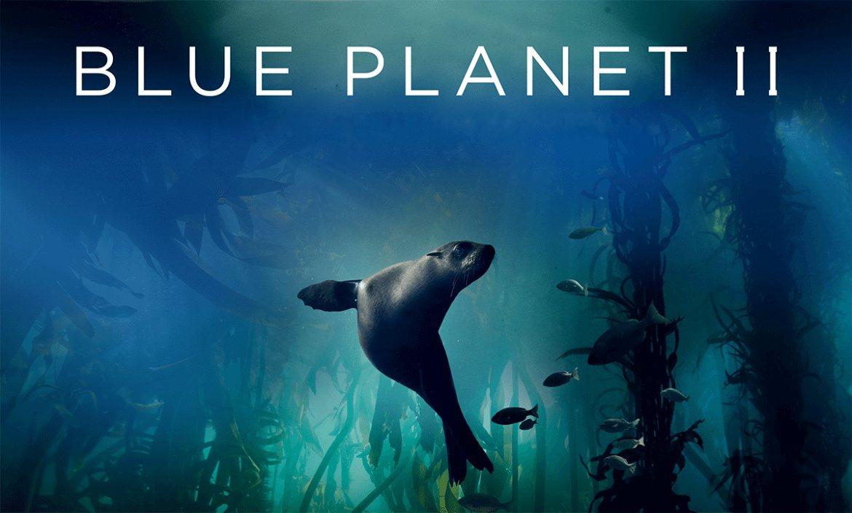 Blue Planet II arrive enfin sur Netflix en décembre 2018
