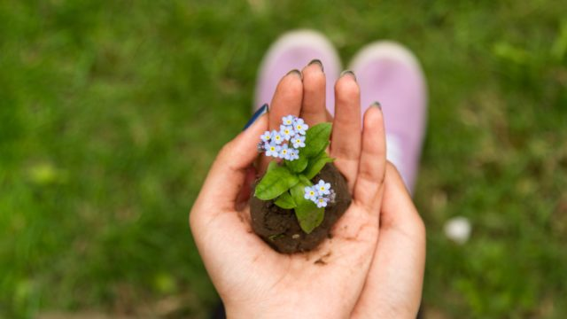 8 simple home gardening tips to get rid of weeds