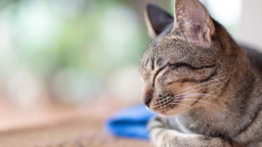 10 signes que votre chat n'est peut-être pas heureux à la maison