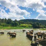 Sri Lanka: Travel guide for the adventurous tourist