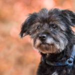 Tips for Taking Good Care of Senior Dogs