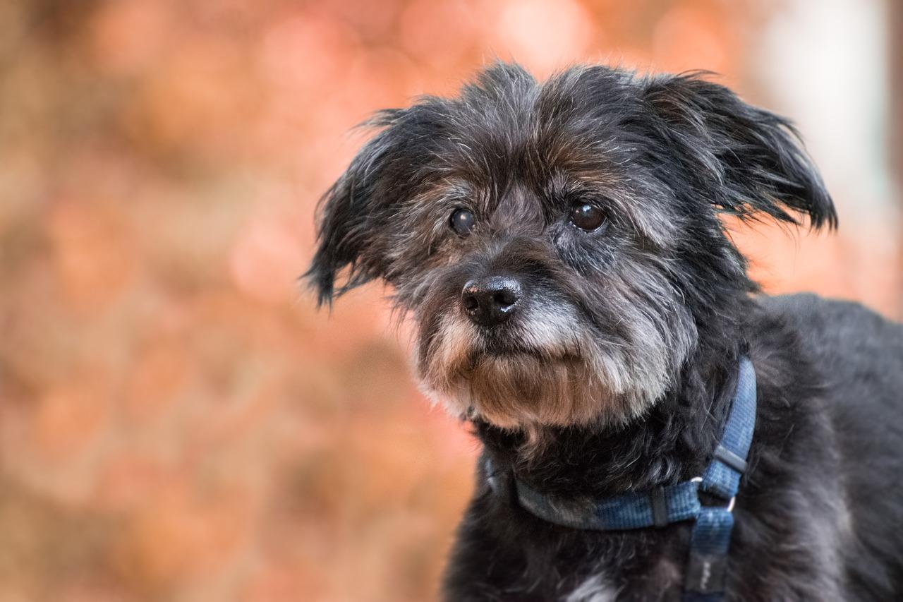 Tips for Taking Good Care of Senior Dogs