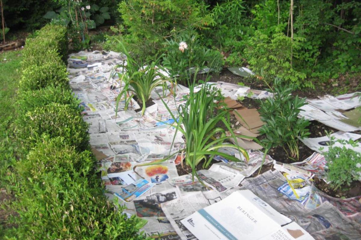 Newspaper Laid Down in Garden