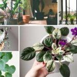 20 Easy Indoor Plants Even Inexperienced Gardeners Can't Kill