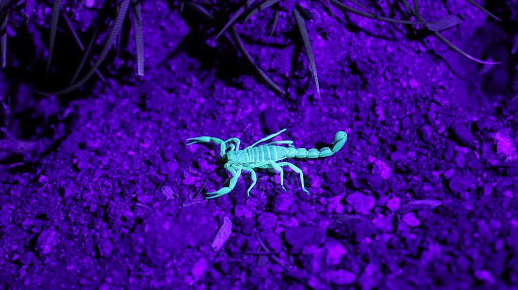 These Weird Creatures Live In The United States