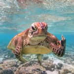 Photographers Captures The Most Funny Wildlife Images