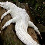 Rarest Albino Animals In The World